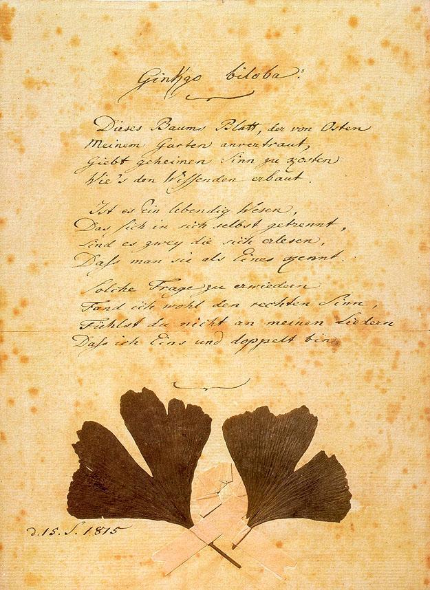 Ginkgo Goethe