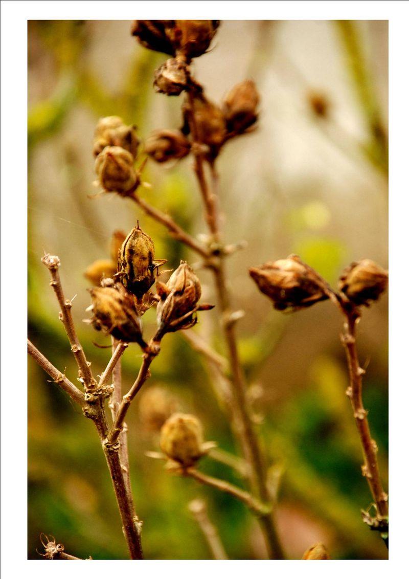 Fleur d'octobre
