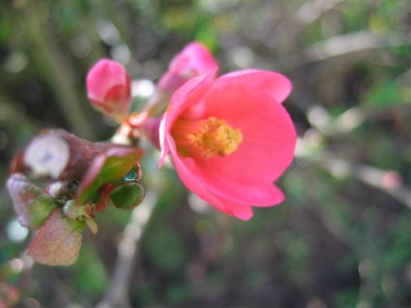 Fleur_dhiver