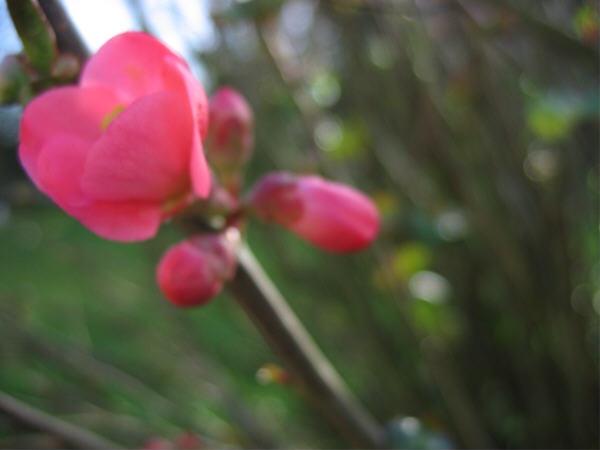 Fleur_dhiver_2
