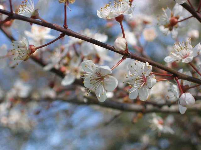 Fleurdemars