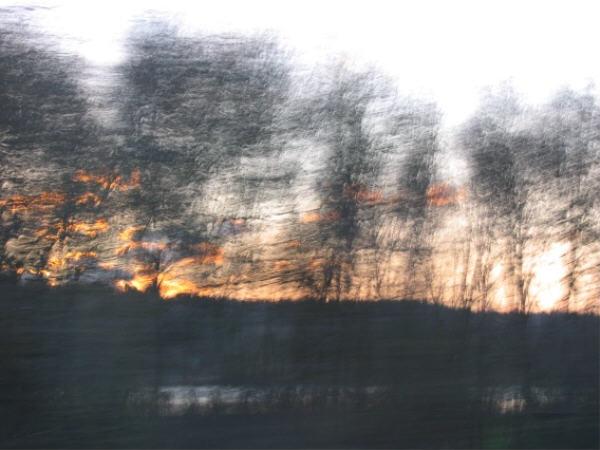 Peindre_des_arbres