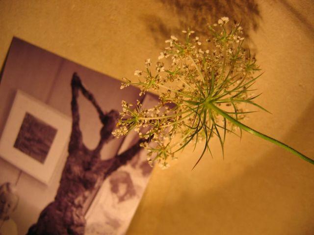 Photo_098_1
