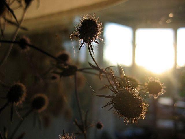 Photo_349